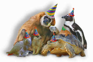 Где можно интересно отметить день рождения