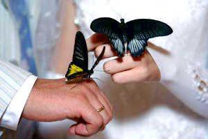 Салют из бабочек в подарок